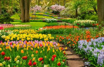 Pictures Of Daffodils And Tulips