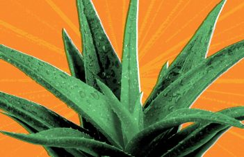 Is Aloe Vera Good For Everyday Use