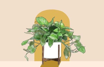 When To Water My Pothos