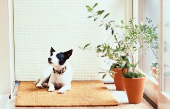 Is Mint Leaves Poisonous To Dogs