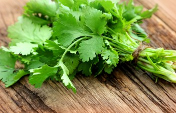 Can Cilantro Cause Upset Stomach