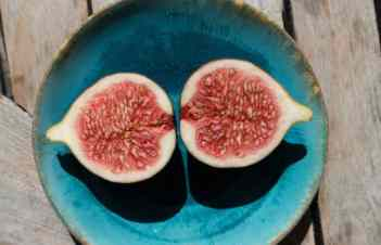 How To Grow Figs From Seeds Indoors
