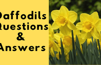 Daffodils Questions And Answers Class 7
